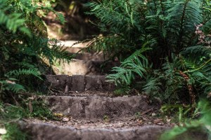 Photo escaliers cascade Lilydale